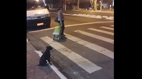 Clever dog waits for traffic light to turn green
