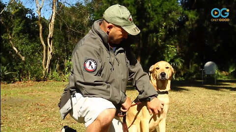 Non-Profit Matches Veterans with Therapy Dogs for Life Changing Support