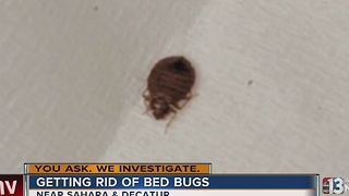 Call center doing more to treat bed bugs - Video