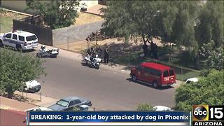 Boy attacked by dog in Phoenix - Video