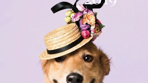 Haute dogs! World renowned Irish hat maker features alongside top UK milliners in calendar showcasing rescue dogs donning elaborate canine couture