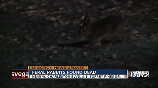Group of feral rabbits found dead - Video