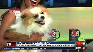 Meet our 23ABC Pet of the Week, Reno! - Video