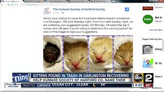 Help name the kittens found in a trashcan in Harford County - Video
