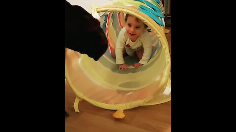 Great Dane fascinated by toddler in play tube