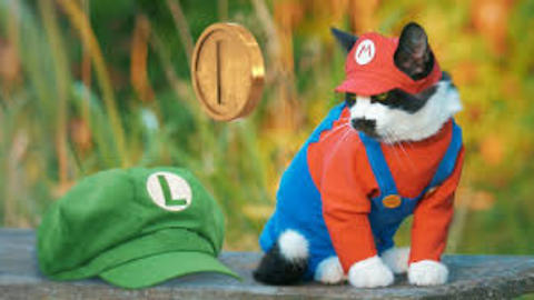 SUPER MARIO CAT BROS.2018
