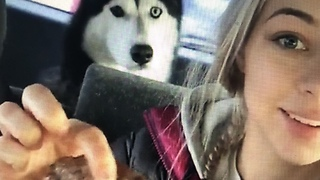 Husky Gets A Weekend Treat Because He Is Such A Good Boy - Video