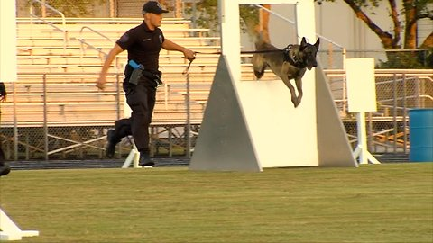 Teams prepare for police k9 competition