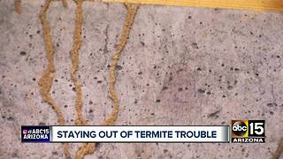 Tips to prevent termites around the Valley - Video