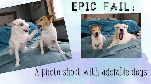 Playful dog photoshoot results in funny epic fail