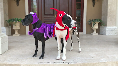 Funny Great Danes Model Lobster And Octopus Halloween Pet Costumes
