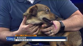 Ask the expert: Pet licenses