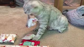 Clever cat unwraps present - Video