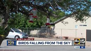 Bird deaths could be linked to uncleaned bird feeders - Video