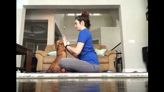 """Finding Her Zen: Cute Dachshund Strikes a """"Dog-a"""" Pose - Video"""