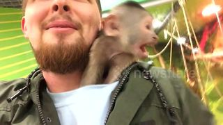 Adorable monkey steals man's hat and gets under his shirt - Video