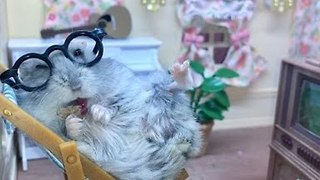 Cheerful Hamster Enjoys Tasty Treat During TV Time