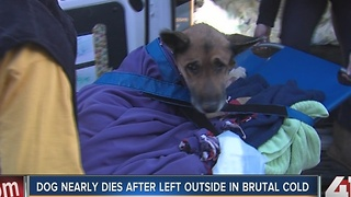 Dog nearly dies after left outside in brutal cold - Video