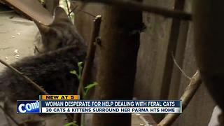 30 feral cats run rampant in Parma Heights neighborhood - Video