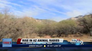 Arizona Health Officials Warn About Rise in Rabies - Video