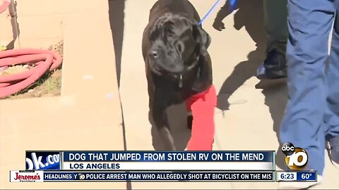 Dogs involved in LA RV chase recovering