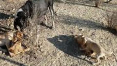 Blind Dog at Crete Shelter Plays With Her Puppies