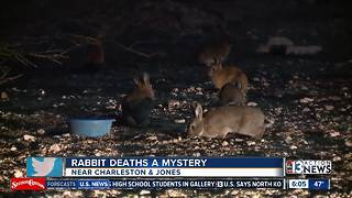 Animal control discovers two more dead rabbits Tuesday - Video