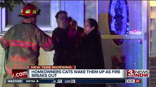 Bellevue cats wake owners up during fire - Video