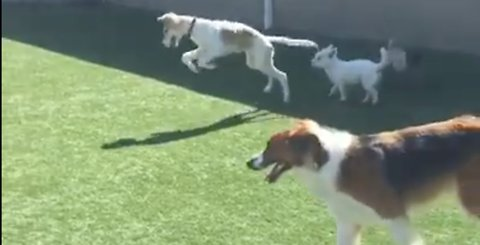 This blind dog trying to make new friends is too much