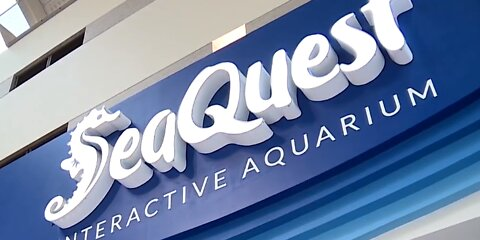Animal Control cracks down on Las Vegas SeaQuest