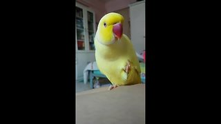 Confused Parrot With Identity Crisis Thinks He's A Banana - Video