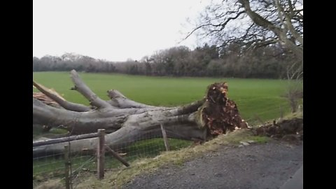 Strong Winds Uproot Dark Hedges Tree Featured in Game of Thrones