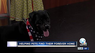 Tri-County Animal Rescue helping find homes for pets in need
