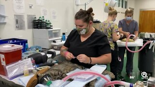 Palm Beach County Animal Control hold spay/neuter event