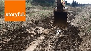 Excavator Lifts Second Deer to Safety After Mud Mishap - Video