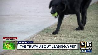 The hidden truths about leasing a pet - Video