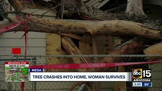 Family speaks out after tree crashes into Mesa home - Video