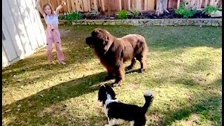 Watching these two mismatched dogs play will make your day!