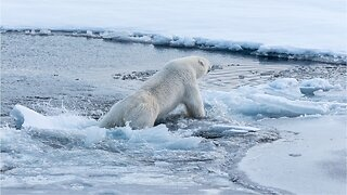 U.N. panel releases alarming report on climate change
