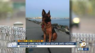 Woman claims motel let dog escape onto highway