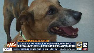 Baltimore Humane Society gives every animal the chance for a healthy life and good home - Video