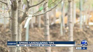 Spring landscaping tips: what you should be doing now - Video