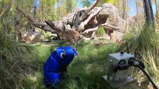 UArizona engineering students helping enrich lives of Reid Park Zoo animals
