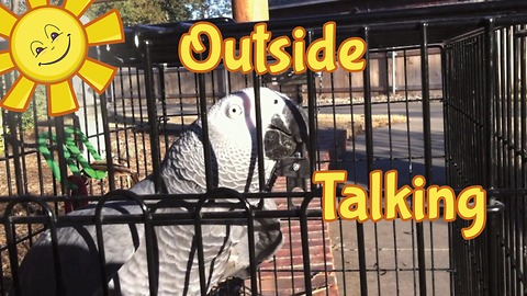 Einstein the Parrot and his owner have a chat outside