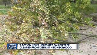 7 Action News helps get fallen tree cleared from Detroit neighborhood - Video