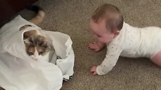 Baby sees cat in plastic bag, breaks out into hysterical laughter
