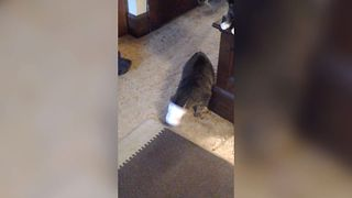 Adorable Cat Loves Cups - Video
