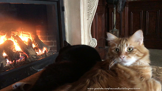 Florida Cat Brothers Enjoy a Nap by the Fireplace  - Video