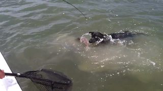 Dog Jumps Into The Ocean To Catch A Fish - Video