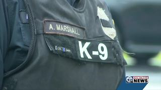 K9 Shield back to work, one week after Officer Lehner's funeral - Video